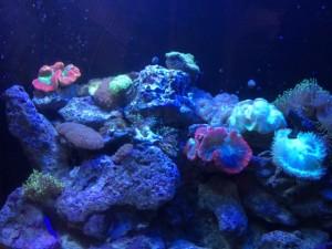 Beautiful Coral at Key West Aquarium
