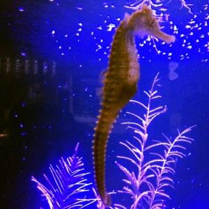 Seahorse at Key West Aquarium