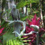 Key West in bloom