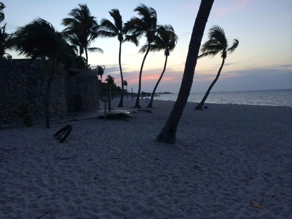 smathers beach palm trees at sunrise best beach in key west