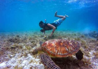 man snorkeling in the water by a sea turtle