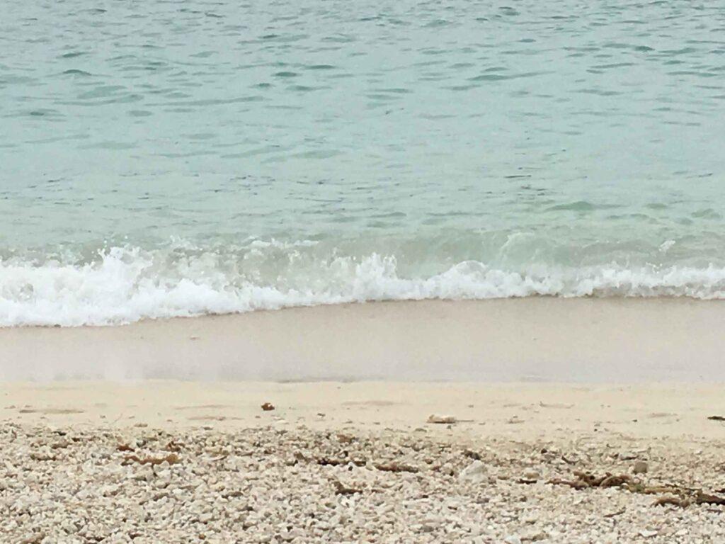 dog friendly beaches in the keys